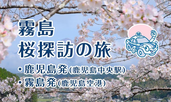 霧島市 桜探訪の旅
